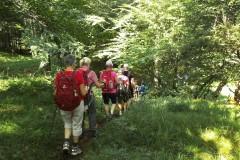 1_8-weiter-auf-Waldsteig-