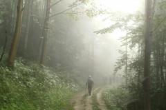 2-Gang-in-den-Nebel