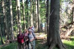 9-Steig-im-Wald-